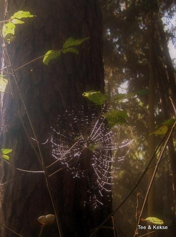 wald_spinnennetz